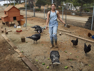 Ronda Rousey chickens
