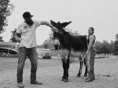 Ronda Rousey Travis Browne donkey