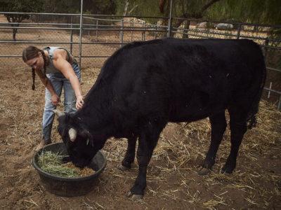 Ronda Rousey bull