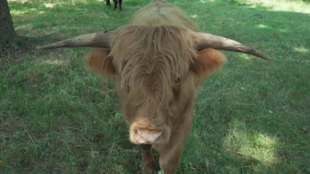 A freaking adorable cow.